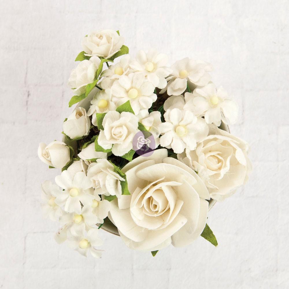 TBD   Prima Flowers - Northpar